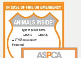 Pet-Safety-Pack